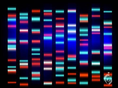 تشخیص سریع اختلالات کروموزومی (QF PCR)