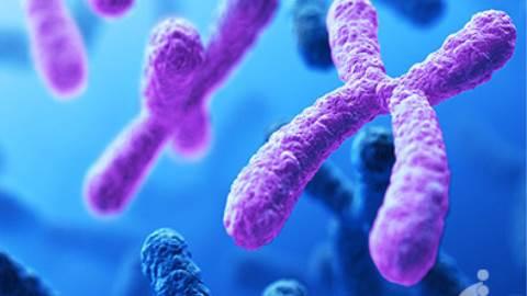 بررسی کاریوتایپ و اختلالات کروموزومی جنین