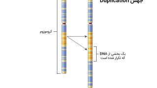 چند نوع جهشهای ژنی امکان پذیر است؟