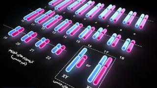آیا تغییر در تعداد کروموزومها میتواند بر سلامت و تکوین انسان اثر بگذارد؟