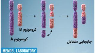 آیا تغییرات ساختار کروموزومها بر سلامت و تکوین اثر میگذارد؟