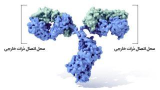 آیا ژنها می توانند در سلول خاموش یا روشن شوند؟
