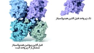 پروتئینها چیستند و چه کاری انجام میدهند؟
