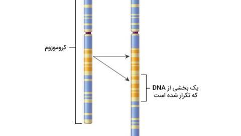 سندروم مضاعف شدگی 7q11.23