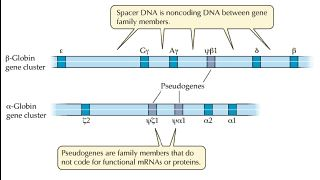 خانوادههای ژنی چیستند؟