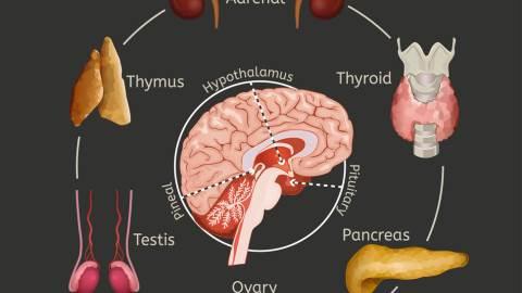 بیماریهای ژتیکی غدد و سیستم اندوکرین
