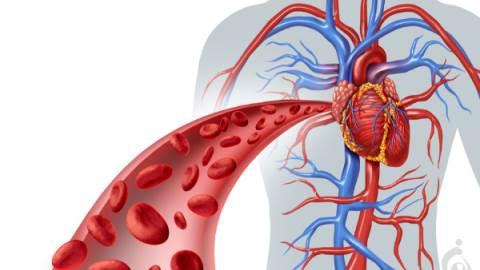 بیماری های ژنتیکی قلب، عروق، خون و سیستم ایمنی