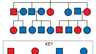 دانستن چه مواردی در سابقه پزشکی و ژنتیکی خانوادگی اهمیت دارد؟