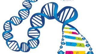 منظور متخصصان ژنتیک از پیش اندازی چیست؟