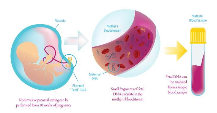 آزمایش تعیین جنسیت از خون مادر