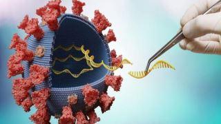 استفاده از روش ویرایش ژنی کریسپر در تشخیص ویروس کرونا