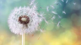 اثر دانه های گرده باعث مهار آنفولانزا و کرونای فصلی می شوند