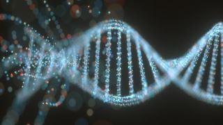 ژنهای فعال از 60000 سال پیش که خطر مرگ با کووید 19 را تشدید می کنند
