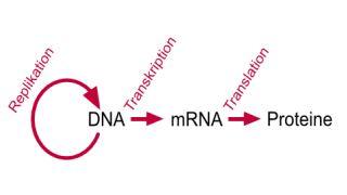 مشاوره ژنتیک در ازدواج فامیلی چیست؟