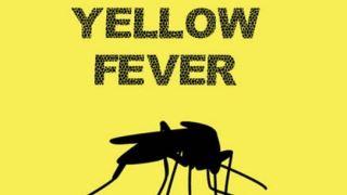بیماری تب زرد چیست ؟ علائم آن را بشناسید!