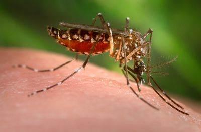بیماری تب زرد چیست و علائم آن