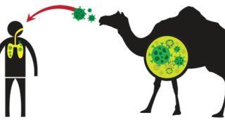 آیا حیوانات می توانند به COVID-19 مبتلا شوند؟