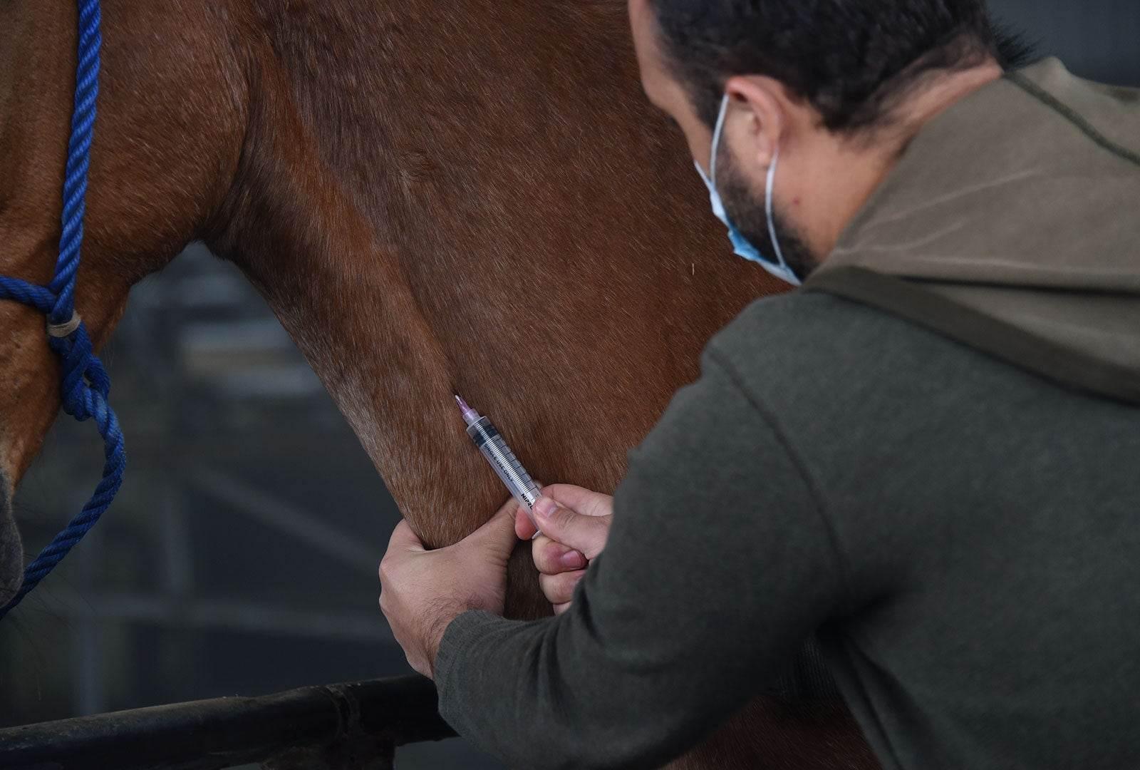 آنتی بادی مشتق شده از اسب