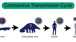آیا ویروس COVID-19 می تواند بین انسان و حیوان منتقل شود؟