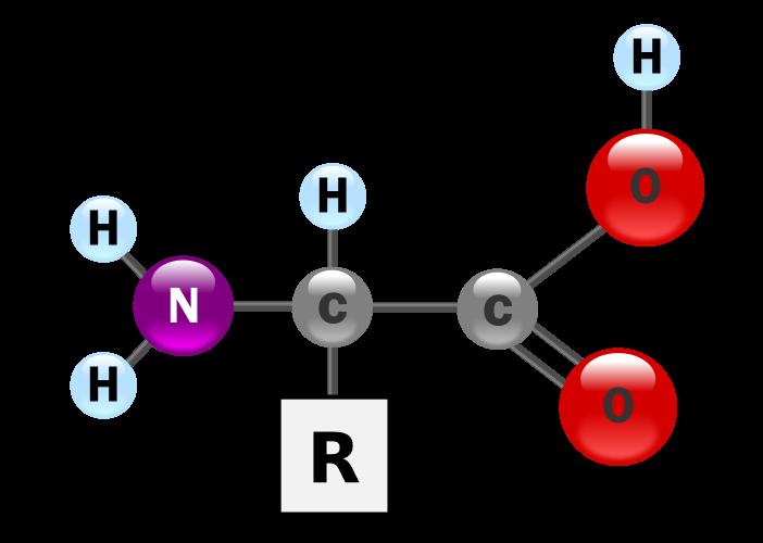 ساختار اسید آمینه