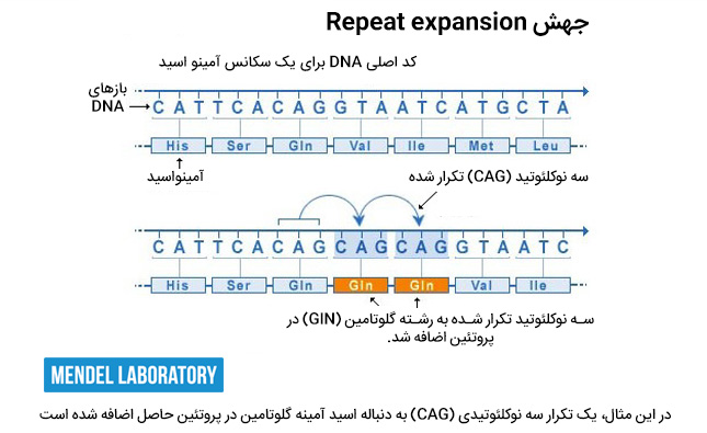 Repeat expansion گسترش تکرارها