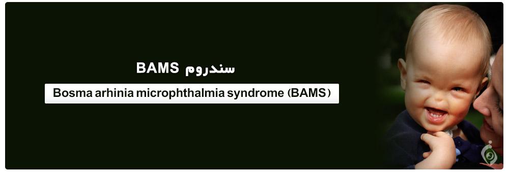 Bosma arhinia microphthalmia syndrome (BAMS)